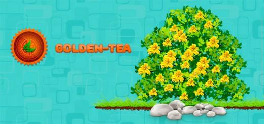 Энергия в Golden Tea – что это для чего нужна?