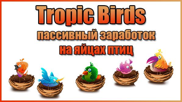 Tropic-Birds – честная игра с выводом денег без баллов
